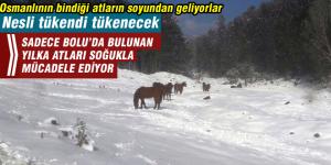 Osmanlı saraylarının gözde atları kışla mücadele ediyor