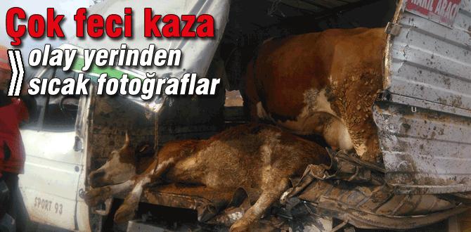 Bolu'daki kazada 3 inek yaralandı
